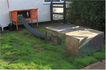 Consider a rabbit run as a hutch is not enough pet Make your own bunny house