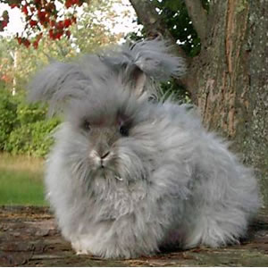 Dog Breeds That Are Good With Cats And Rabbits