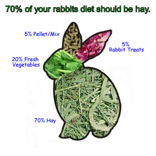 Best Food For Wild Baby Rabbits