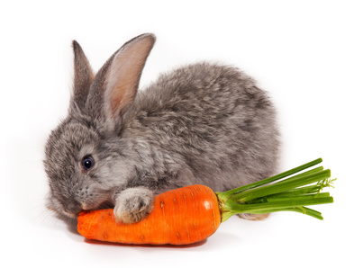rabbit diet and health   what do i feed my rabbit pet