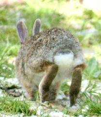Find out how a Rabbit interprets the world... | Pet Warehouse