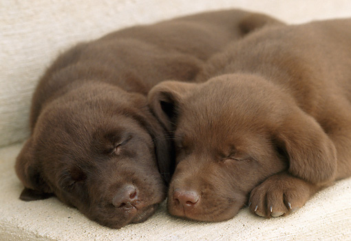 Why Puppies Sleeping All Day Is Normal - Vetinfo.com