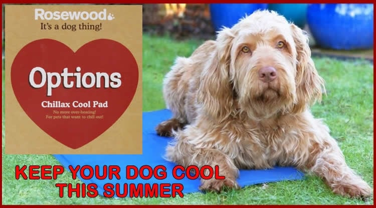 Keep Your Dog Cool This Summer