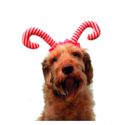 Cupid & Comet Candy Cane Antlers for Dogs