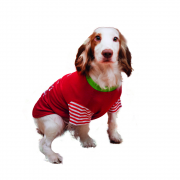 Cupid & Comet Festive T-Shirt For Dogs