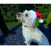 Cupid & Comet Santa Hat for Dogs